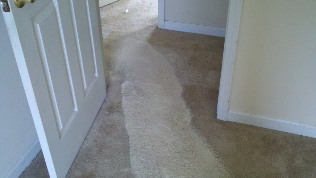 Deep Carpet Clean